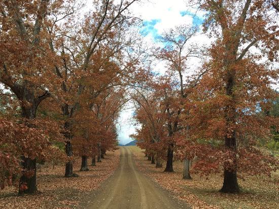 Darlington, Australia: photo7.jpg