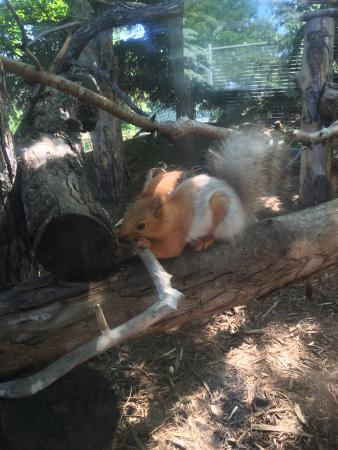 Red River Zoo: Red Squirrel