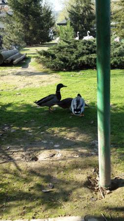 Canakcilar Hayvanat Bahcesi ve Botanik Park
