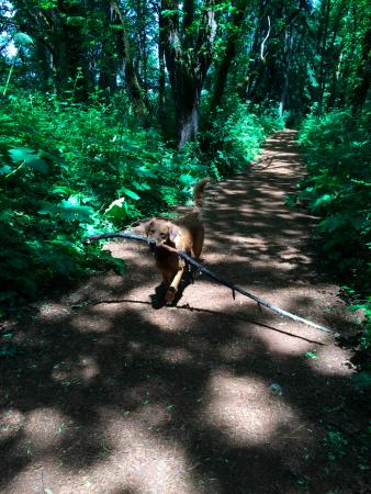 "Alton Baker Park : Lily carrying a ""stick"" along one of the paths."