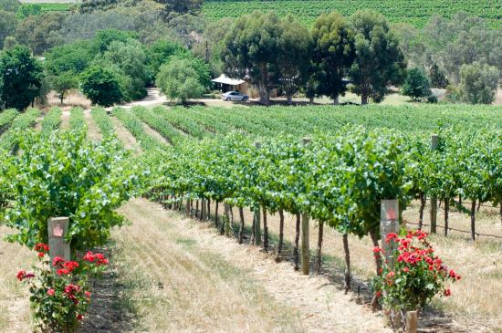 Seize the Day Wines: Our vineyard and cottage for guests