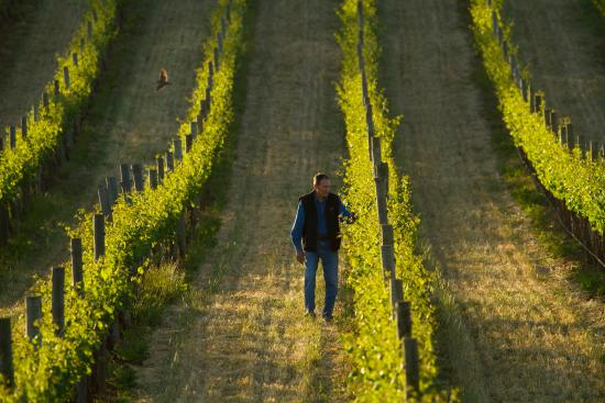 Seize the Day Wines: Pete in the vineyard at sunset