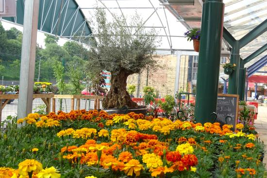 The Mill Outlet & Garden Centre