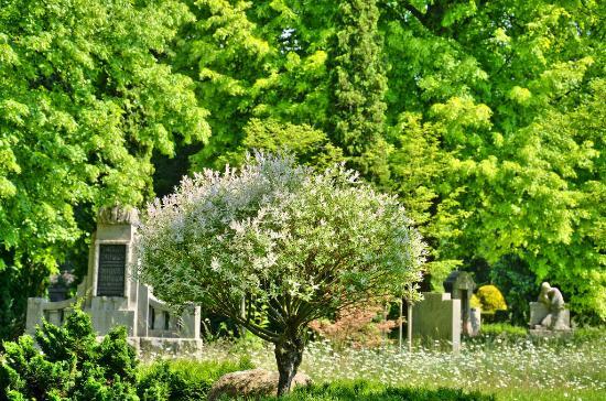 Alfeld (Leine), Германия: Friedhof Alfeld