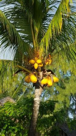 Veranda Palmar Beach: 20160602_164635_large.jpg