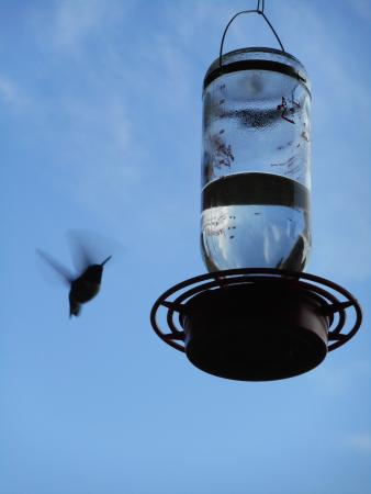 Bullberry Inn B&B: Hummingbirds on the porch