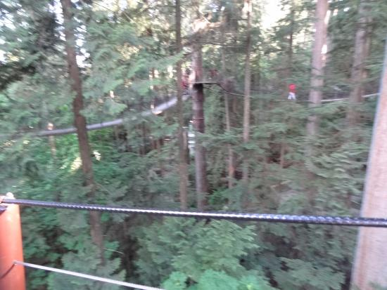 North Vancouver, Canada: treetop walkways