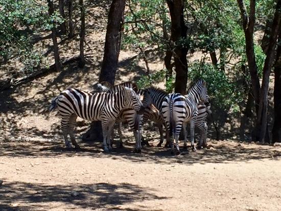 Safari West: photo3.jpg