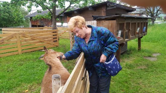 Weerberg, Austria: egy kis kecske a kertben