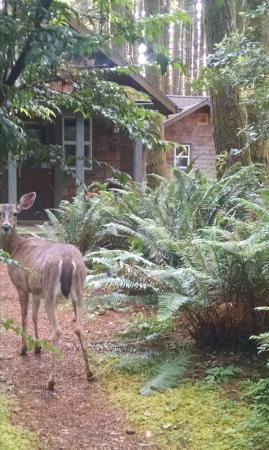 WildSpring Guest Habitat: IMG_20160610_104413_large.jpg