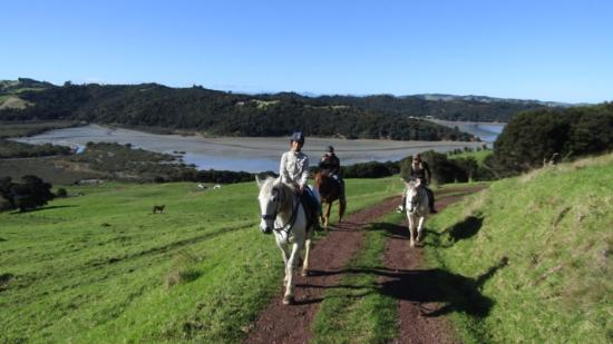 Isla Waiheke, Nueva Zelanda: Steve rode ahead to take this gorgeous view.