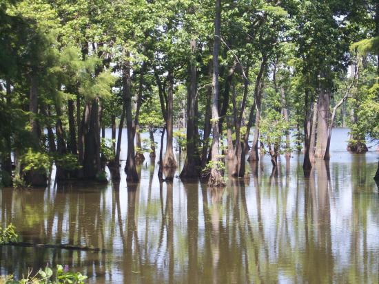 Horseshoe Lake State & Wildlife Area