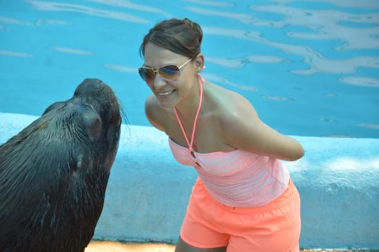 Dolphin Discovery Puerto Vallarta: Show con Pepe el lobomarino, estuvo genial!!!!