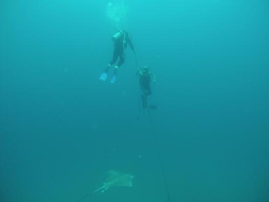 Deep Mexico: Buceo en barco hundido, lleno de vida marina que gran experiencia
