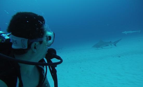 Deep Mexico: buceo con tiburon toro (fantastico)