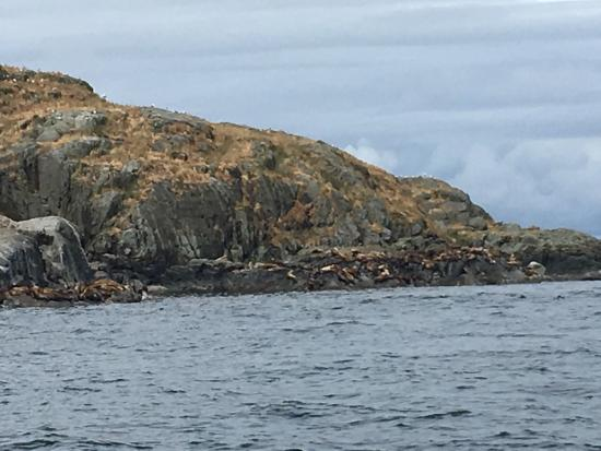 Mansons Landing, Canada: Took these today as we went last minute tour of Cortes. The Seal Lions were out suntanning!