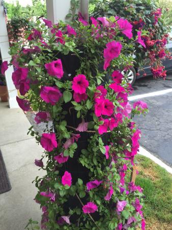 Williamstown, MA: summer flower