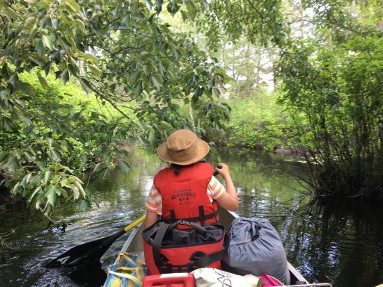 Shamong, NJ: the Mullica River