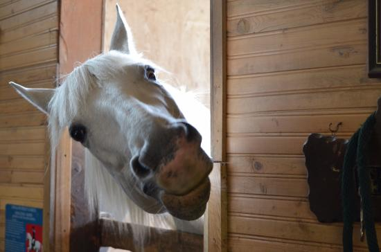 Roberts Creek, Canadá: Horse was very eager to accept treats in exchange for tricks