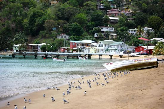Charlotteville: the shore