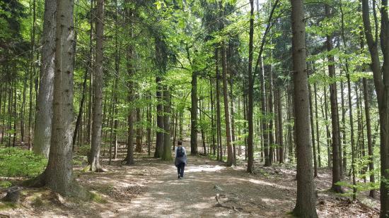 South Moravian Region, Tjekkiet: Walk through the forest