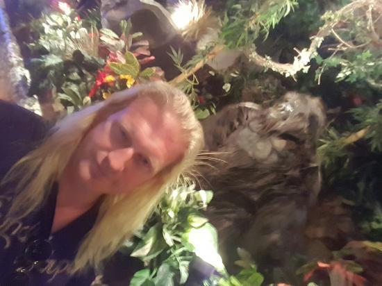 Rainforest Cafe : 20160610_180157_large.jpg