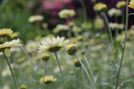 Astley Hall: Smell the flowers