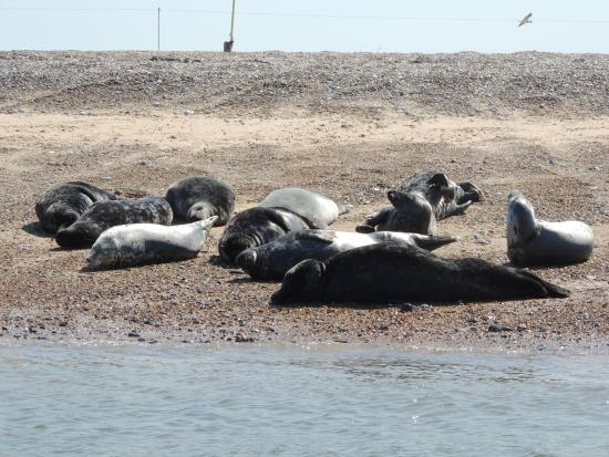 Bishop's Boats: Seals!