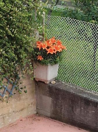 Agriturismo Doremi: Relax nel salotto all'aperto tra i fiori e le coccole  di Tobino...