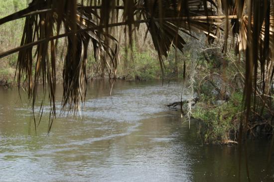 Wauchula, Флорида: Peace River