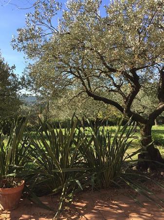 La Radassiere : Le soleil est au RDV en sortant de la chambre...quelle magnifique jardin, quelle paix.
