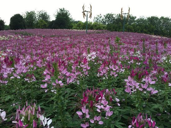 Liuzhou Yuanboyuan: Park Flowers!