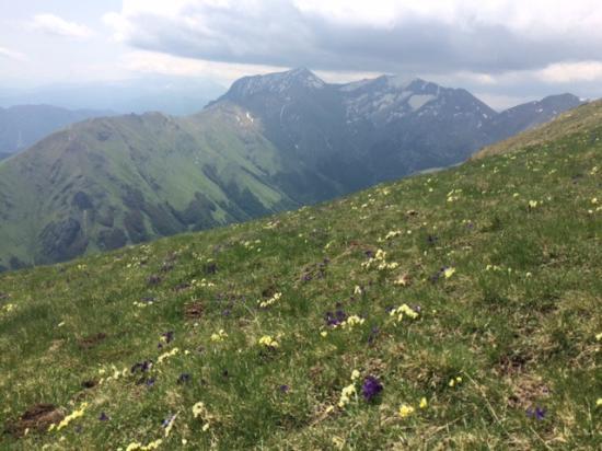 Montelparo, Italia: Wild flowers in Sibillini Mtns, trip organized by Hotel Leone. We had a great day.