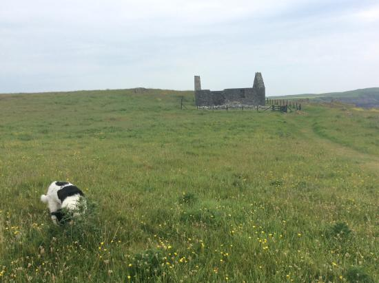 Isle of Whithorn, UK: The walk across the field to St Ninian's Chapel.