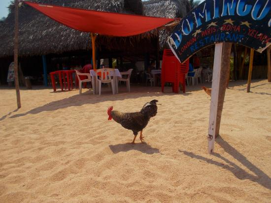 Casa Santa Cruz: Main beach chickens