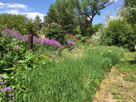 Lakewood, CO: Beautiful scenery along trail in May