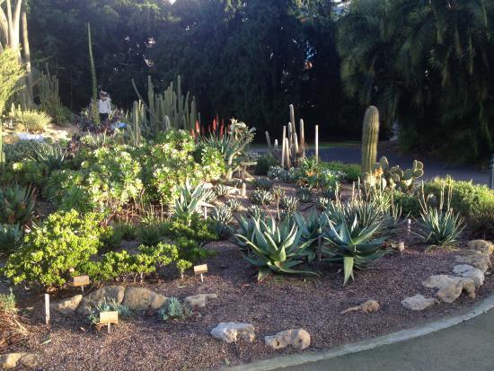Adelaide Botanic Garden Outside The Glhouse Cacti And Succulents
