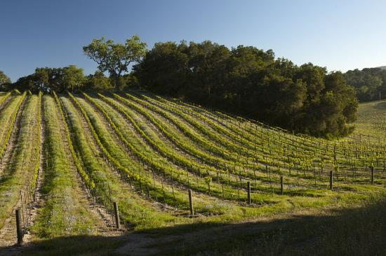 Dunning Vineyards