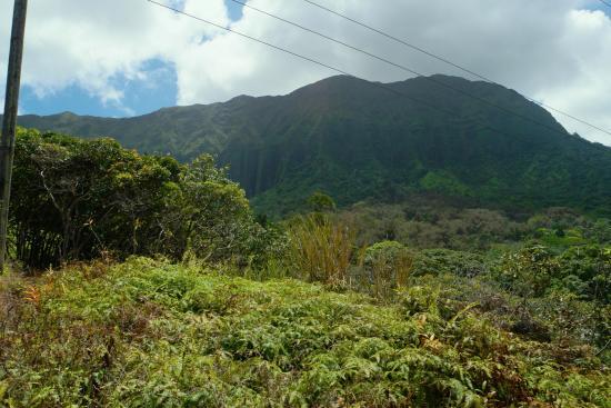 Maunawili Trail: Maunawili