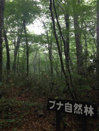 Shirakami Sanchi: photo3.jpg