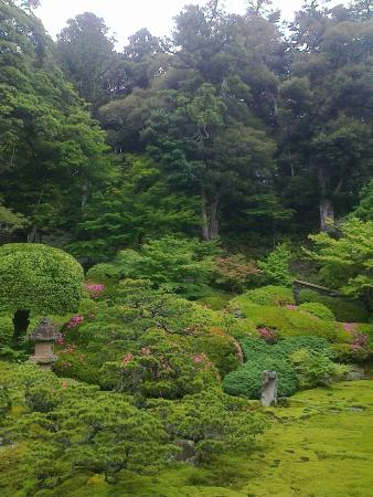Matsue Castle Town: This deep, unique greeness is the highlight of Matsue around this time of a year