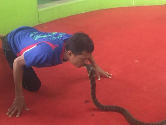 Phuket Cobra Show and Snake Farm: photo0.jpg