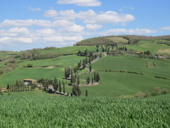 Tours Around Tuscany - Day Tours : Cypress road near Monticchiello
