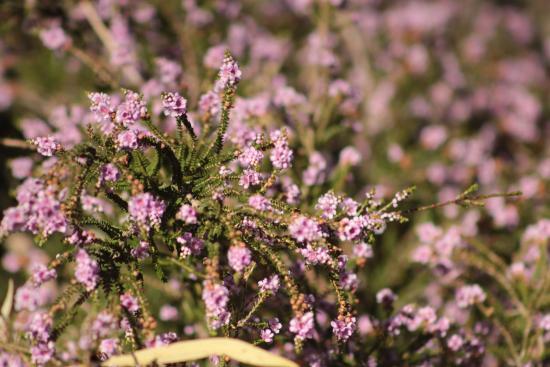 Identificación de Wildflower