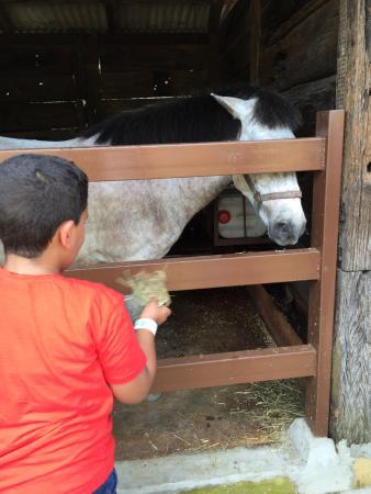 Farm In The City: Horse Feeding