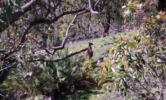 Gidgegannup, Αυστραλία: Wildlife