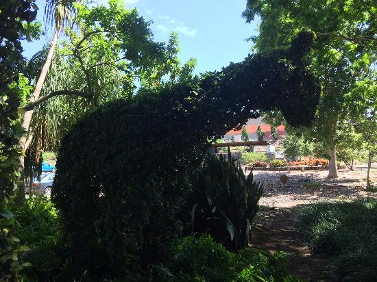 Pearl City, HI: Topiary!