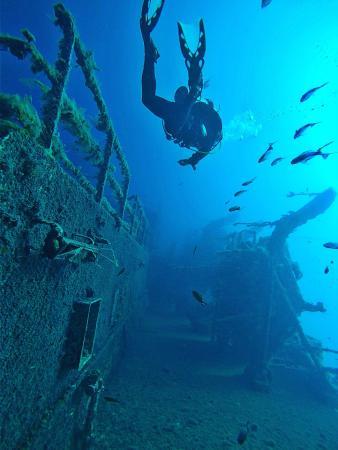 SunFish Divers