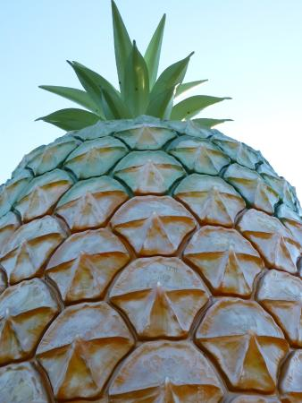 Zdjęcie Big Pineapple