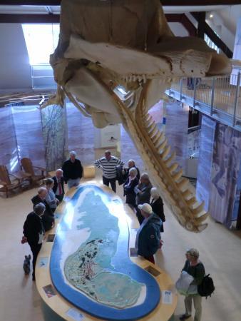 """Spiekeroog, Germany: Das Walskelett im Naturparkhaus """"Wittbülten"""" von vorn"""